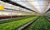 Norwegia – oferty pracy przy zbiorach papryki i pomidorów