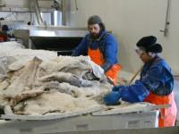 Praca w Norwegii na produkcji bez znajomości języka norweskiego (przetwórnia rybna)