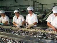 Praca w Norwegii na produkcji konserw rybnych od zaraz – 2013