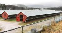 Rolnictwo – fizyczna praca w Norwegii na fermie norek od lutego 2013