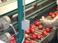 Oferty pracy w Norwegii bez znajomości języka produkcja, sortowanie warzyw i owoców Sandnes