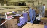 Praca Norwegia na produkcji – pakowanie jaj przy taśmie od zaraz 2014
