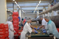 Praca w Norwegii produkcja spożywcza pomocnik od zaraz Narvik