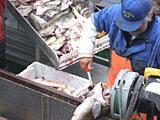Norwegia Praca sezonowa na produkcji rybnej w przetwórni dla mężczyzn