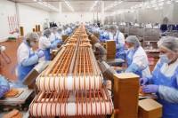 Przetwórnia rybna oferty pracy w Norwegii na produkcji bez języka Stavanger