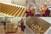 Praca Norwegia produkcja spożywcza od zaraz dla Polaków Fredrikstad