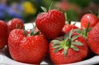 Sezonowa praca Norwegia – zbiory owoców truskawek, malin od 06.2014