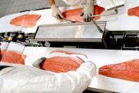 Praca Norwegia w przetwórni rybnej na produkcji od zaraz dla par Bergen