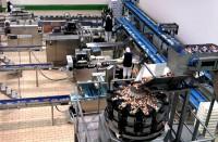 Praca w Norwegii przy produkcji spożywczej bez znajomości języka Tonsberg