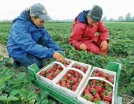 Zbiory truskawek sezonowa praca w Norwegii od lipca bez znajomości języka Hamar