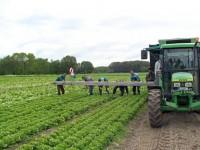 Sezonowa praca Norwegia w rolnictwie na gospodarstwie z językiem angielskim Oppaland