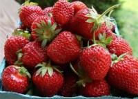 Norwegia oferty pracy przy zbiorach owoców od zaraz bez języka Elverum