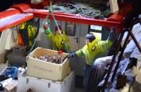 Dam pracę w Norwegii dla rybaka bez języka norweskiego od zaraz przy połowie ryb Bomlo