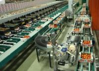 Praca Norwegia pakowanie-sortowanie warzyw sezonowa oferta bez języka Moss