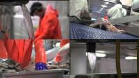 Oferty pracy w Norwegii na produkcji rybnej bez znajomości języka 2015 Nordland
