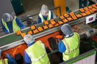 Praca w Norwegii przy pakowaniu, sortowaniu warzyw bez znajomości języka Moss