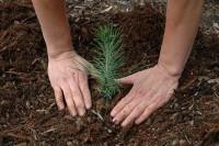 Norwegia praca sezonowa w leśnictwie od zaraz przy sadzeniu drzewek Hamar 2015