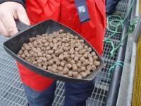 Praca w Norwegii od zaraz na produkcji karmy dla zwierząt bez języka Oslo