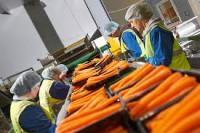 Praca Norwegia od zaraz dla par pakowanie, sortowanie warzyw bez języka w Moss