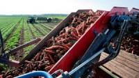 Sezonowa praca w Norwegii od września Eidsberg zbiory warzyw bez języka