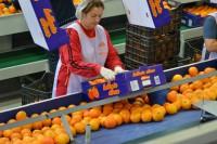 Bez znajomości języka Norwegia praca na produkcji – sortowanie owoców Sandefjord od zaraz na 3 miesiące