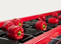 Norwegia praca od zaraz przy pakowaniu warzyw bez języka w przetwórni Moss