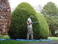 Oferta sezonowej pracy w Norwegii bez języka dla ogrodnika przy utrzymaniu zieleni Bergen