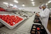 Bez znajomości języka Norwegia praca przy pakowaniu słodyczy od zaraz Oslo