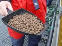 Od zaraz praca w Norwegii przy produkcji karmy, paszy dla ryb bez języka Kopervik