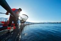 Bez znajomości języka od lipca dam fizyczną pracę w Norwegii na farmie rybnej