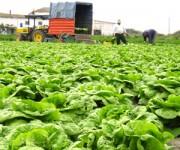 Dam sezonową pracę w Norwegii przy zbiorach warzyw w rolnictwie od zaraz Eidsberg