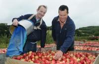 Oferta sezonowej pracy w Norwegii – zbiory jabłek od zaraz Elverum 2016