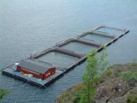Od zaraz dam fizyczną pracę w Norwegii Horten bez języka na farmie rybnej