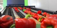 Od zaraz praca Norwegia przy pakowaniu, sortowaniu warzyw bez języka Moss