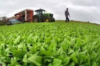 Oferta sezonowej pracy w Norwegii pomocnik w rolnictwie od zaraz bez języka
