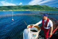Fizyczna praca w Norwegii od zaraz na farmie rybnej bez znajomości języka Horten
