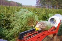 Sezonowa praca Norwegia w leśnictwie przy choinkach od zaraz Trondheim 2017