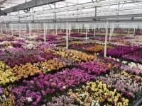 Ogrodnictwo sezonowa praca w Norwegii w szklarni przy kwiatach Hamar 2018