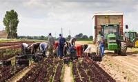 Oferta sezonowej pracy w Norwegii od zaraz pomocnik w rolnictwie Moss 2018