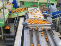 Oferta fizycznej pracy w Norwegii bez języka sortowanie owoców od zaraz Oslo