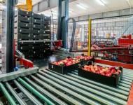 Fizyczna praca w Norwegii bez znajomości języka sortowanie owoców od zaraz Oslo