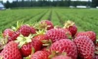 Od zaraz oferta sezonowej pracy w Norwegii na wakacje 2019 zbiory owoców w Magnor