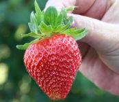 Na wakacje 2020 sezonowa praca w Norwegii przy zbiorach owoców w Magnor