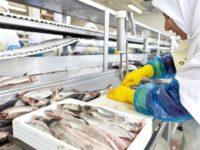 Oferta pracy w Norwegii z językiem angielskim przy produkcji rybnej od zaraz Bergen