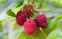 Od zaraz Norwegia praca sezonowa bez języka na wakacje 2020 zbiory owoców miękkich Lillehammer