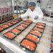 produkcja dan gotowych lasagne 3