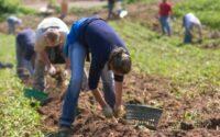 Dla par bez języka oferta sezonowej pracy w Norwegii od zaraz w rolnictwie Moss 2020