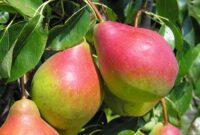 Od zaraz sezonowa praca Norwegia przy zbiorach owoców jabłek i gruszek w Lillehammer