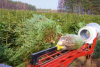 Norwegia praca sezonowa od zaraz bez języka w leśnictwie przy choinkach Trondheim 2020