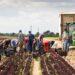 praca-sezonowa-zagranica-rolnictwo-2021